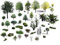 PS立面中常用到的植物素材 PSD