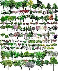 PS植物立面断面素材多种样式 PSD
