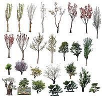 彩色高干树PSD素材