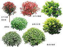 常用灌木素材PSD PSD