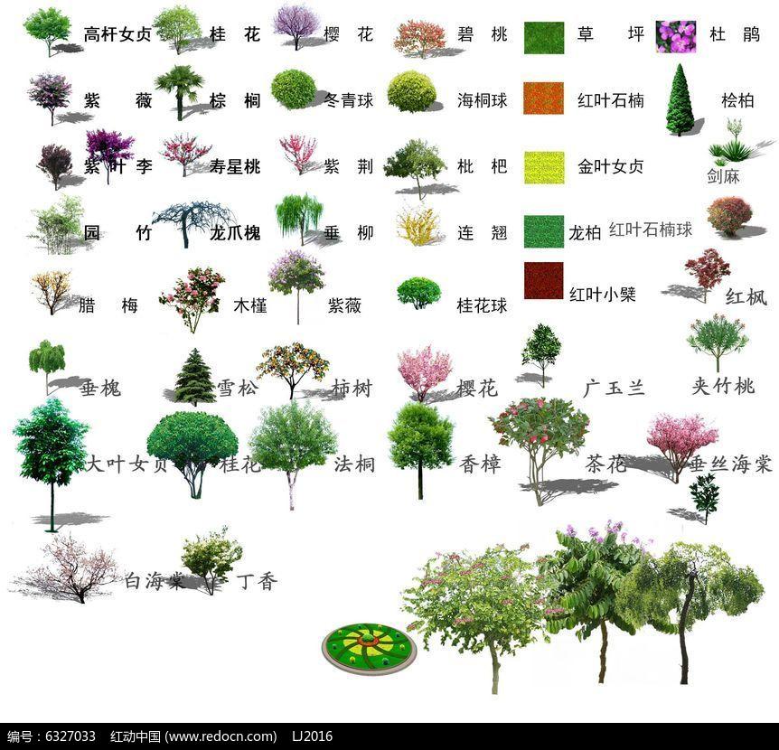 多品种景观树ps立面素材