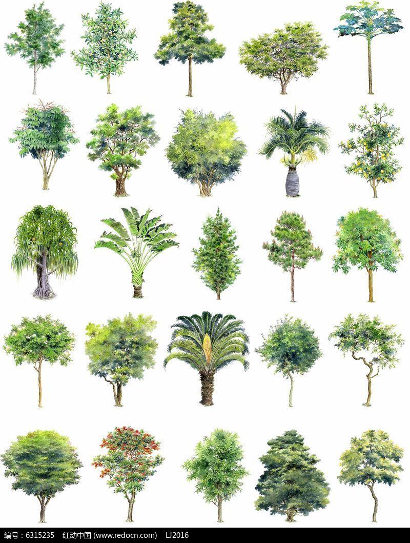 乔木植物立面手绘psd素材图片