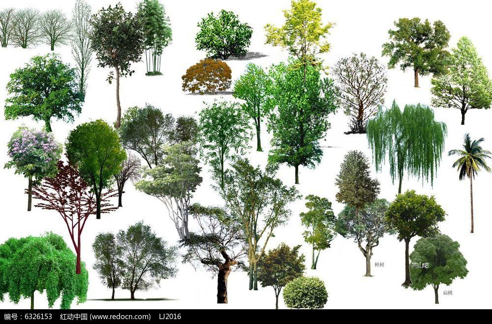 水边植物平面图手绘图例