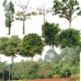 树林PSD分层乔木灌木素材