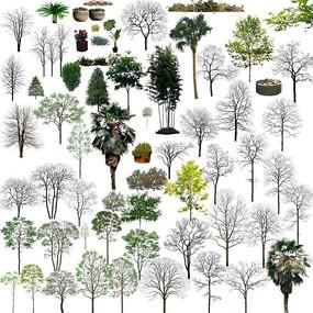 无叶树PSD素材分层