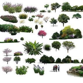 真实植物PS效果图立面素材 PSD