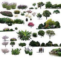 真实植物PS效果图立面素材