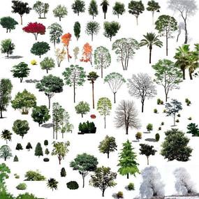 中式景观树PSD PSD