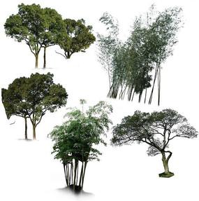 竹林树林PS素材 PSD