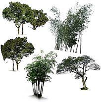 竹林树林PS素材