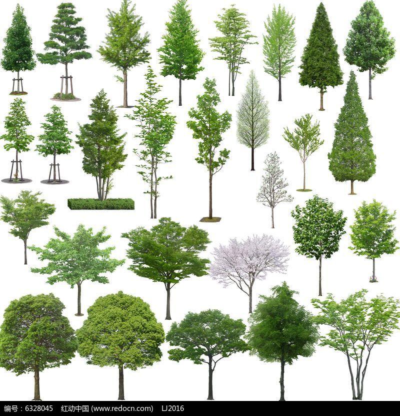 常见行道树PSD素材图片