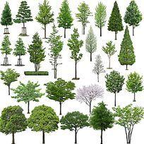 常见行道树PSD素材 PSD