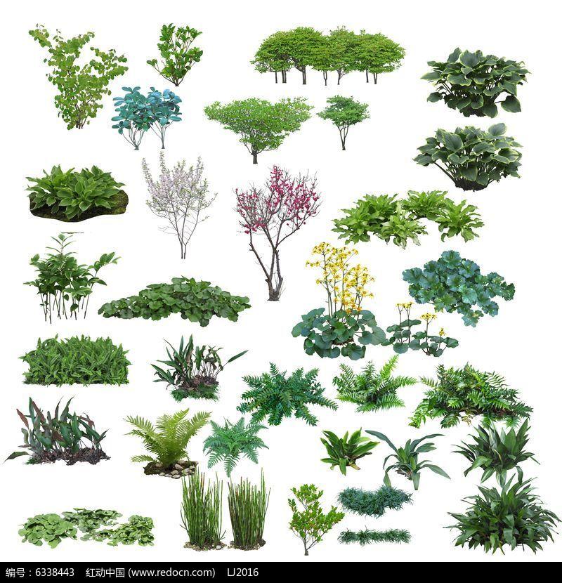常绿灌木psd素材
