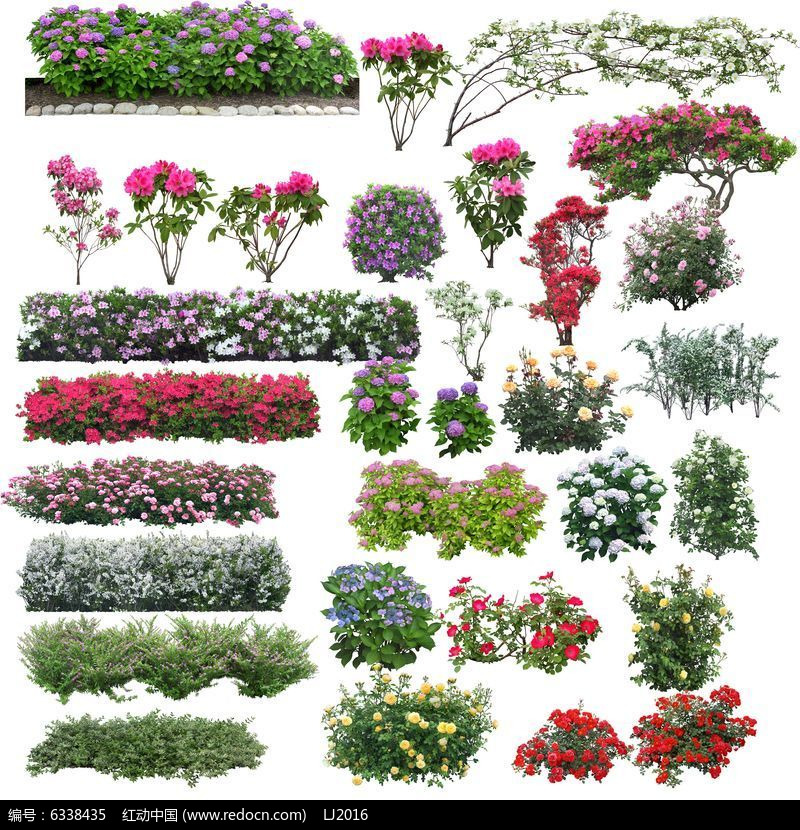 原创设计稿 方案意向 植物 花带ps立面素材  请您分享: 红动网提供