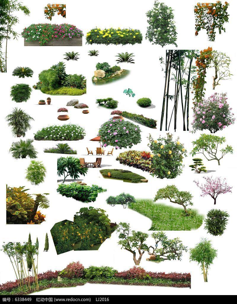 灌木植物景观手绘平面