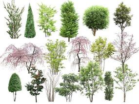 园林中常见植物PSD