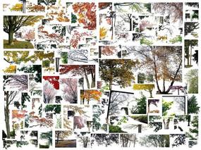 前景植物素材PSD立面透视效果图