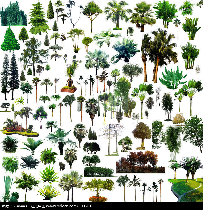 植物乔木图例感高清