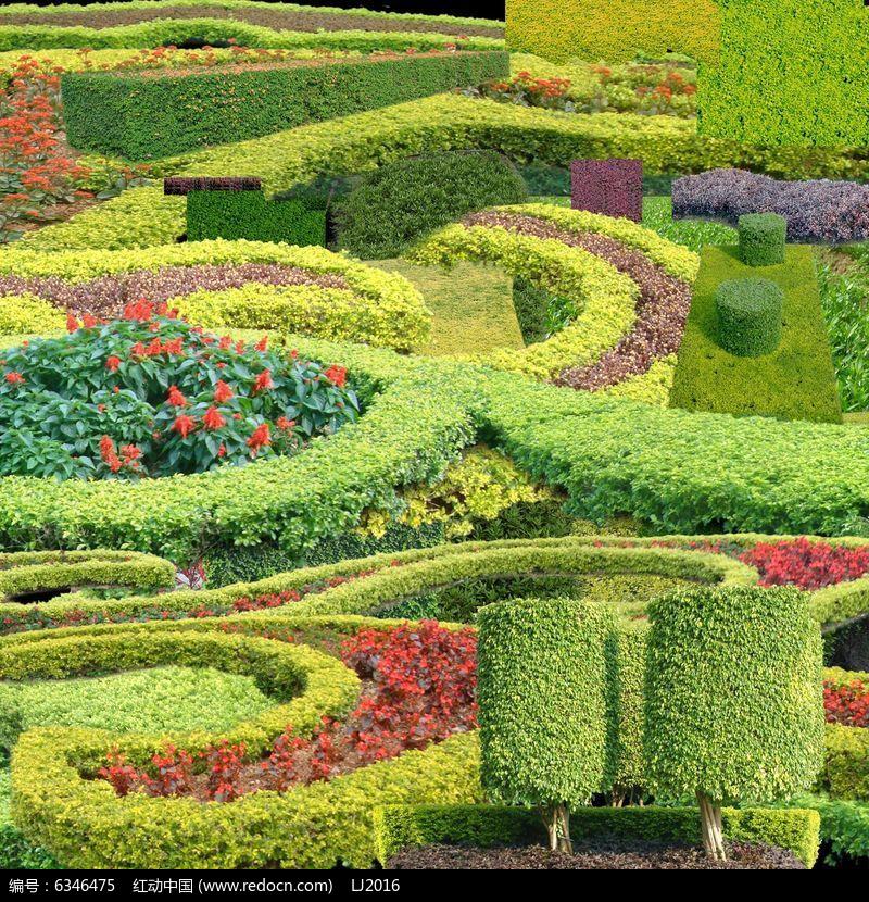 绿篱植物平面图