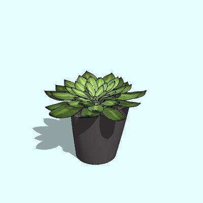 多肉盆栽植物su模型