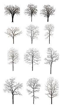 12种枯树PS素材