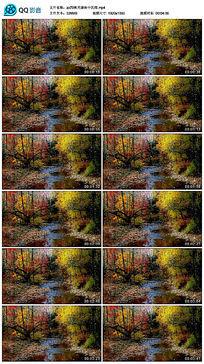 秋天森林中的雨晚会背景