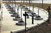 弧形双排树阵广场