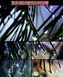 叶尖水滴水珠高清实拍视频素材