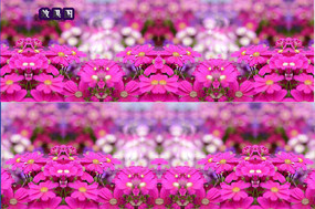 粉色花朵炫彩背景视频