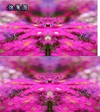梦幻花朵背景AVI视频