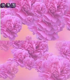 牡丹花开新年庆祝视频