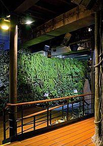 室内植物绿墙
