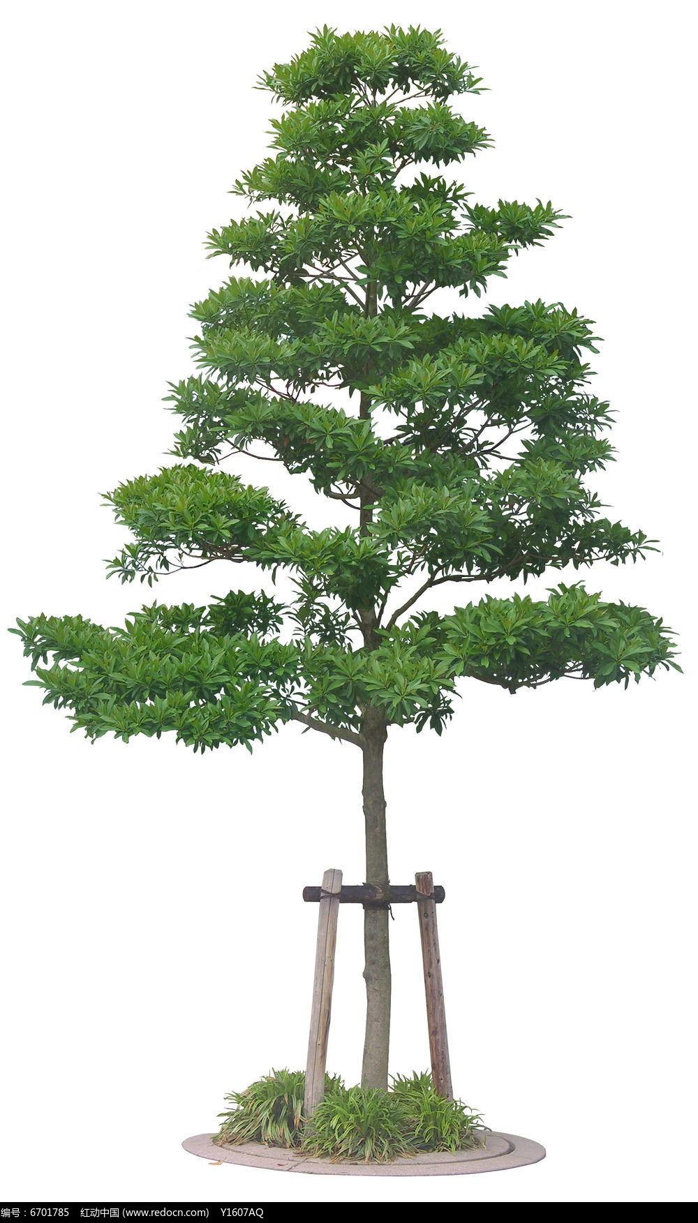 树造型设计图片欣赏
