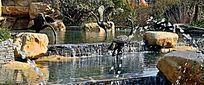 水鹤雕塑小品