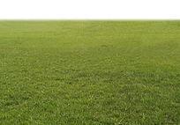 草坪PS素材
