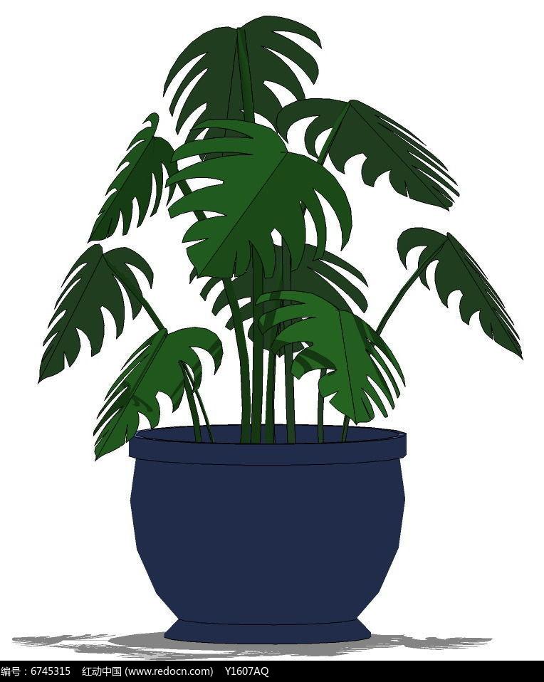 龟背竹su植物盆栽