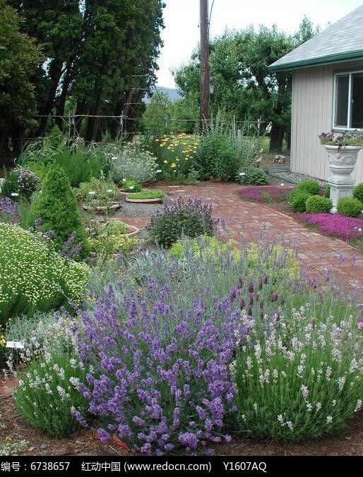 芳香植物花境图片