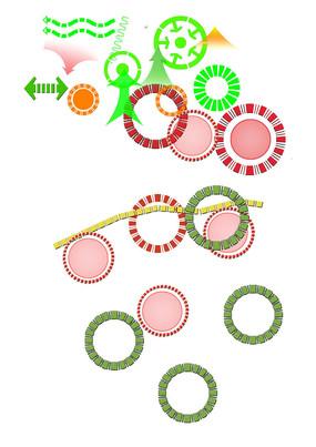 分析图箭头圈圈 (12)