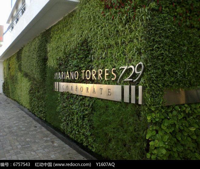 logo植物绿墙