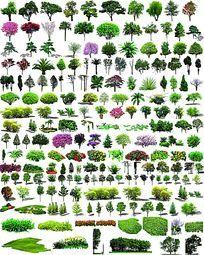 常用植物PS立面素材集合