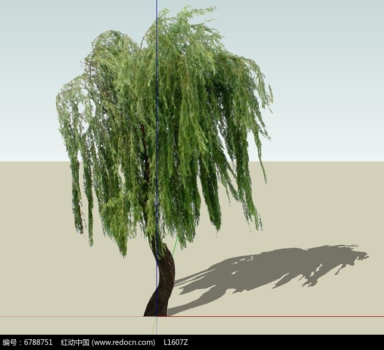 柳树初中画法步骤