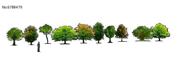 乔灌木类手绘植物