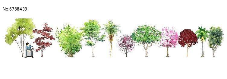 手绘观花乔木图片