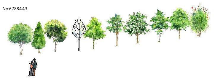 手绘乔木植物图片