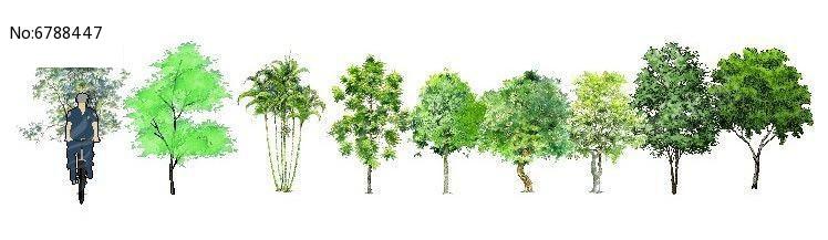 手绘小乔木植物