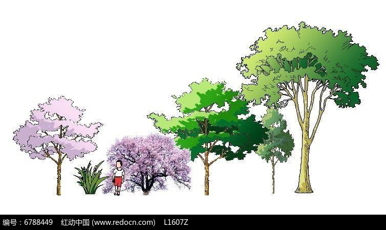 手绘樱花香樟素材