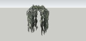 格子藤植物SU模型