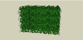 绿篱植物SU模型