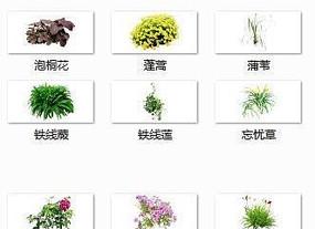 植物单体集合SU模型 skp