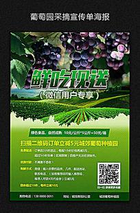 创意葡萄采摘宣传单海报